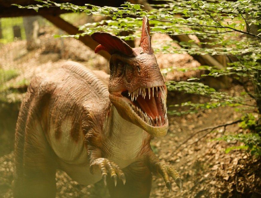 De Vizitat In Aceasta Toamna Dino Parc Rasnov