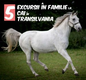Excursii în Familie la Cai în Transilvania