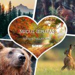 Micul Iepuras. Poveste terapeutica 101 Healing Stories for Kids and Teens gokid